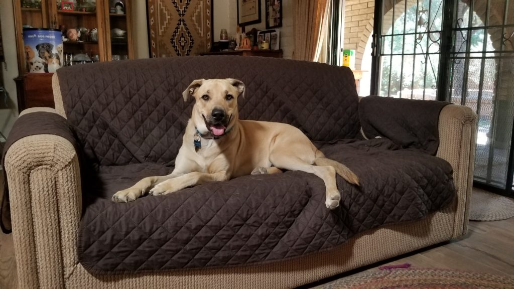 Dog on a couch smiling