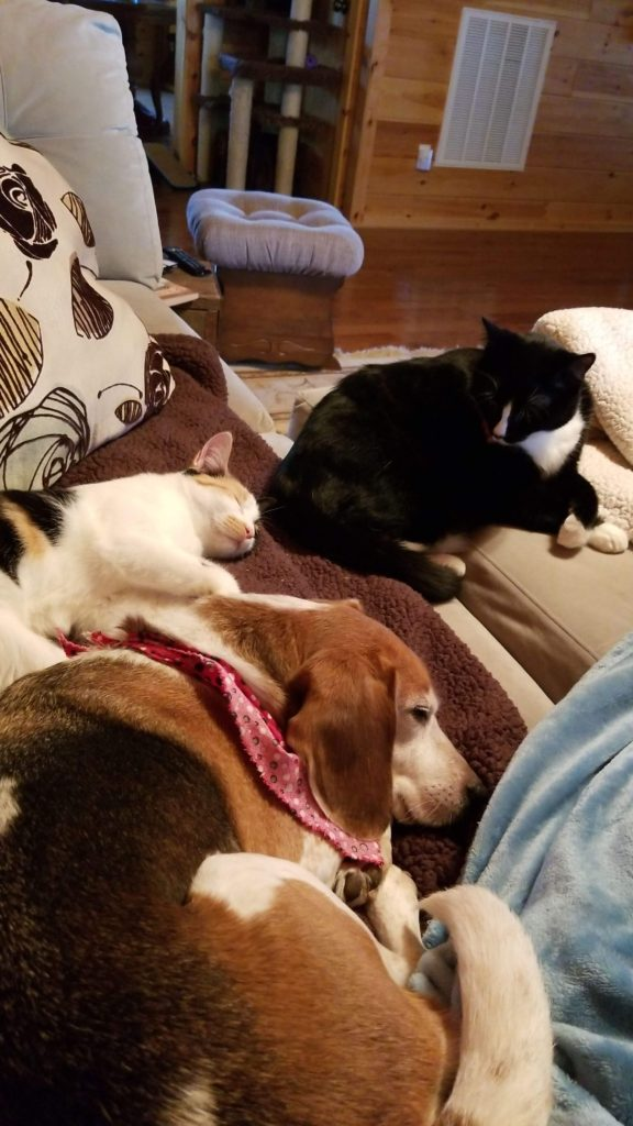 dog and cats curled up on a couch
