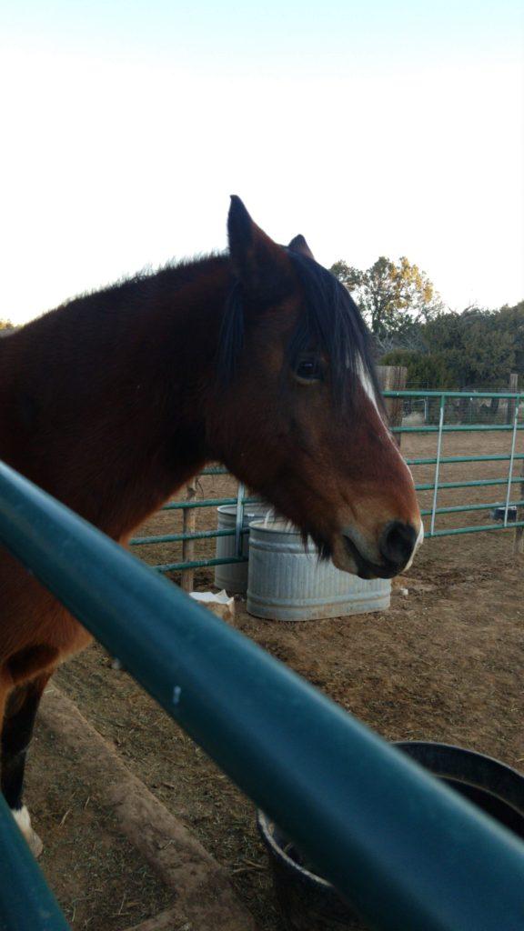 Mustang behind gate