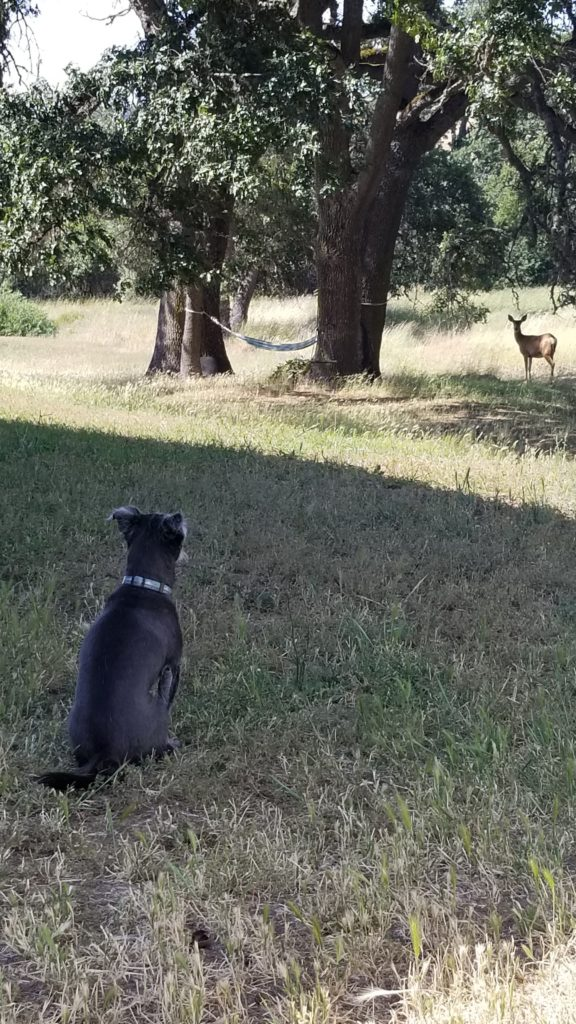 Dog stare at deer