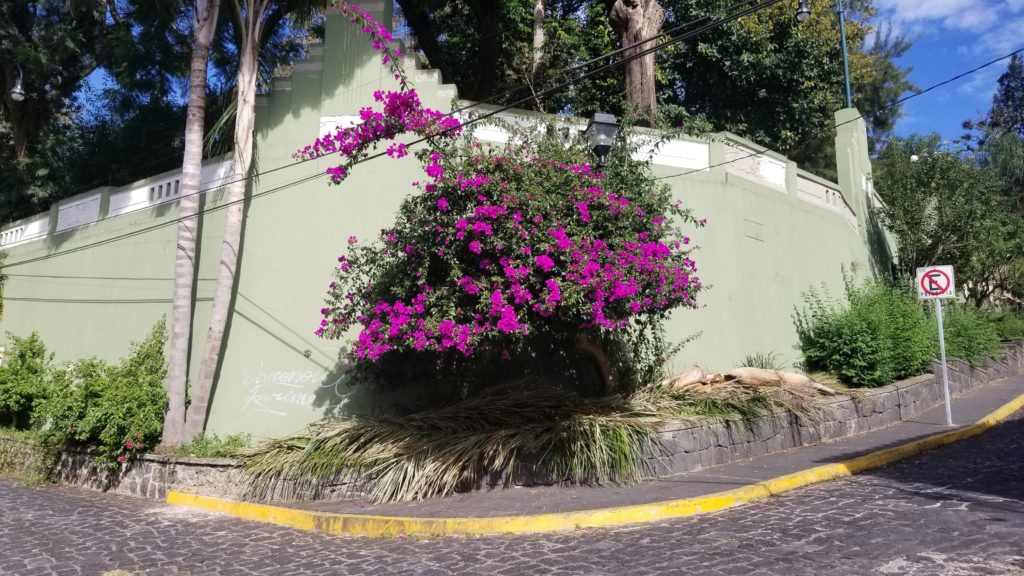 Flowers in Xalapa city center