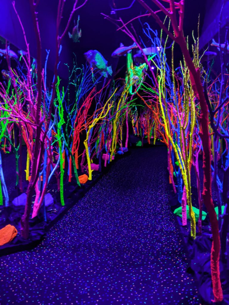Neon woods - Meow Wolf Santa Fe